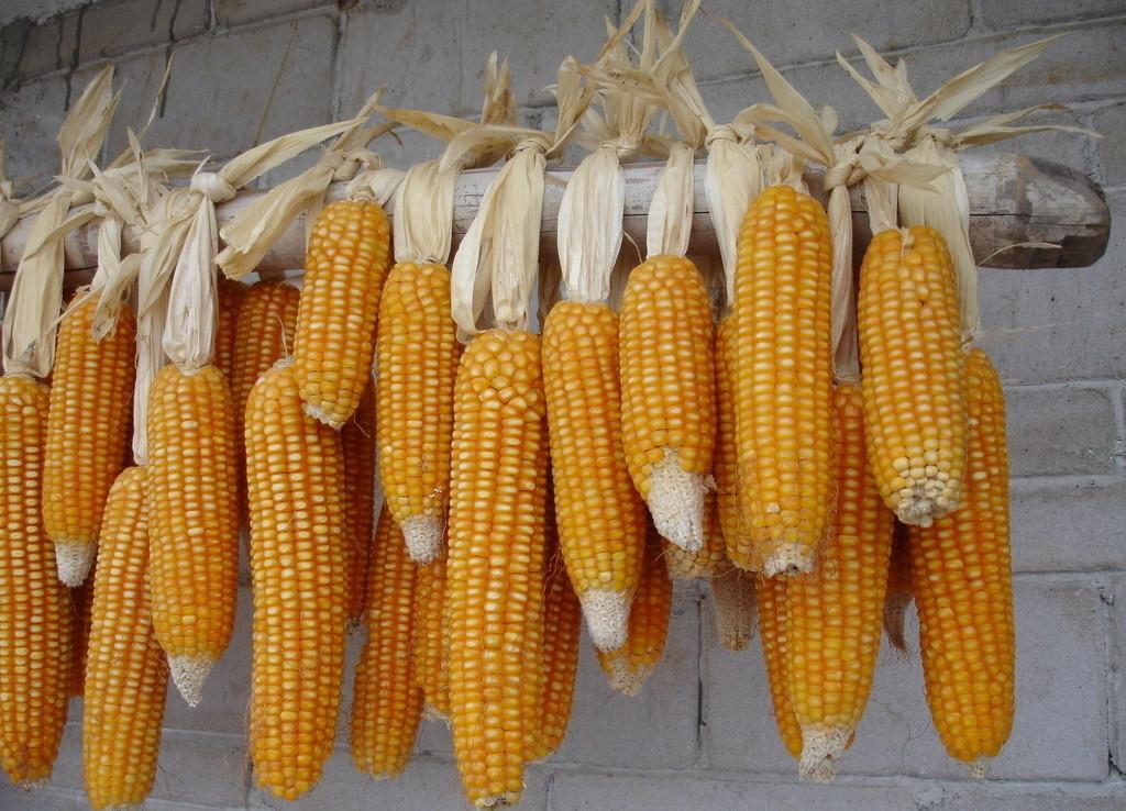 玉米期货一手多少钱