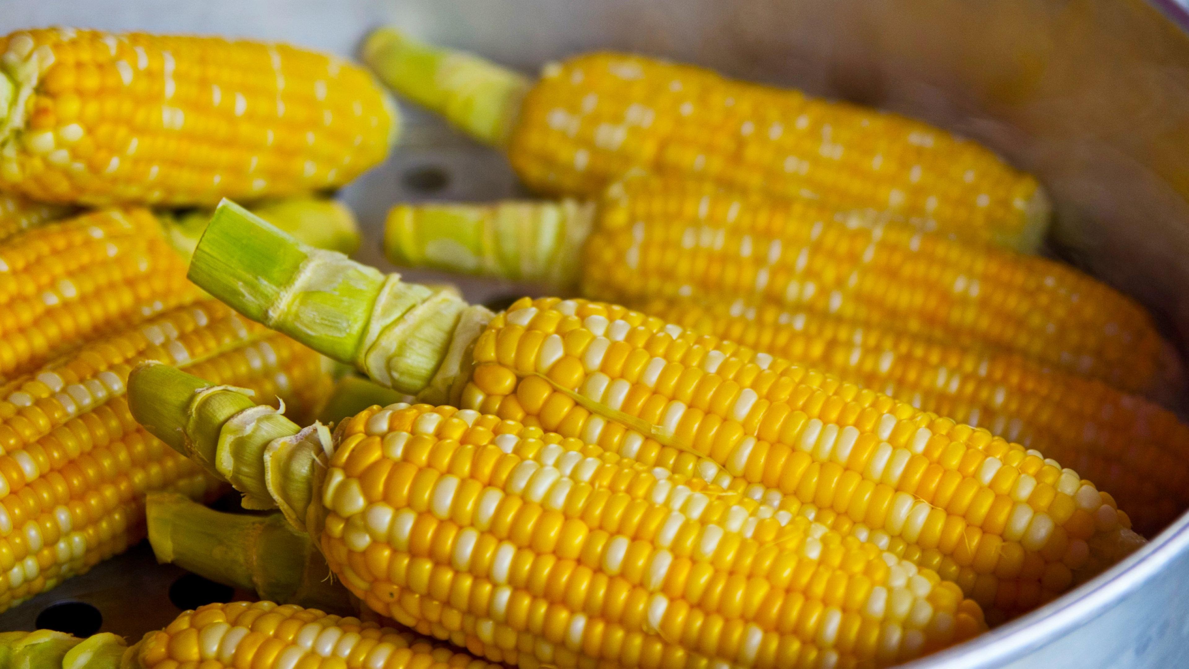 玉米期货开户 玉米期货一手多少钱