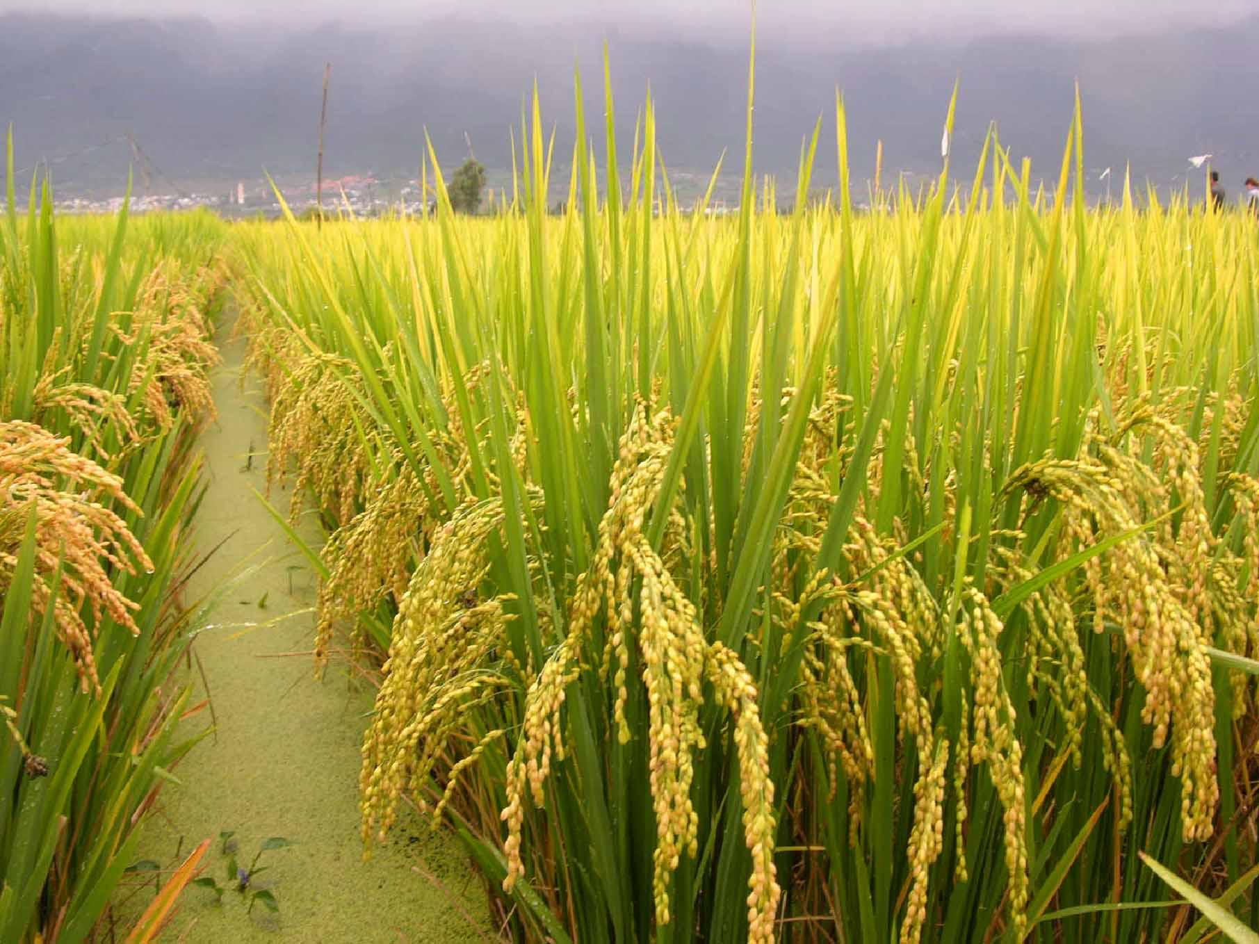 粳稻期货保证金 一手粳稻保证金多少钱