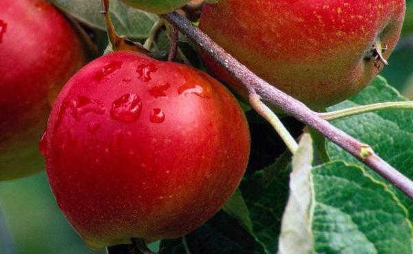 苹果期货一手多少钱