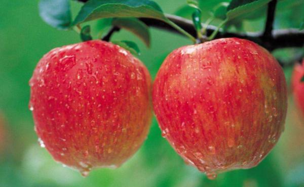 苹果期货波动一个点多少钱