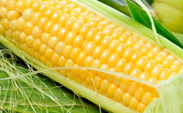 玉米期货多少钱一手