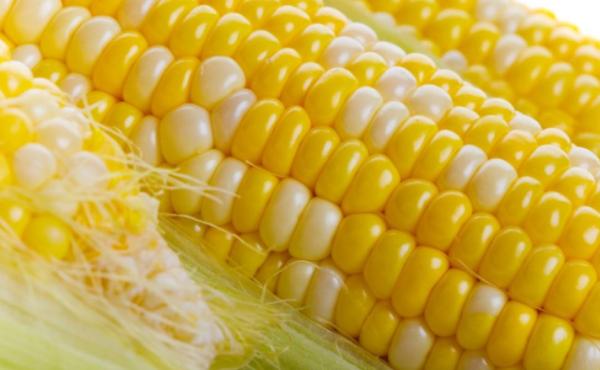 玉米期货保证金比例