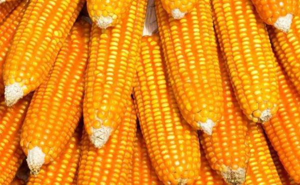 玉米期货保证金计算