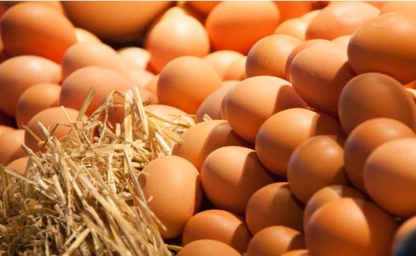鸡蛋期货一手一个点多少钱 澳门赌场视频