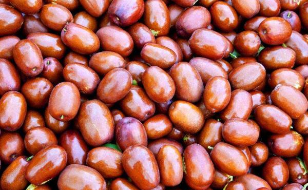 红枣期货的交易时间