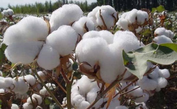 棉花期货平今仓手续费计算是多少钱